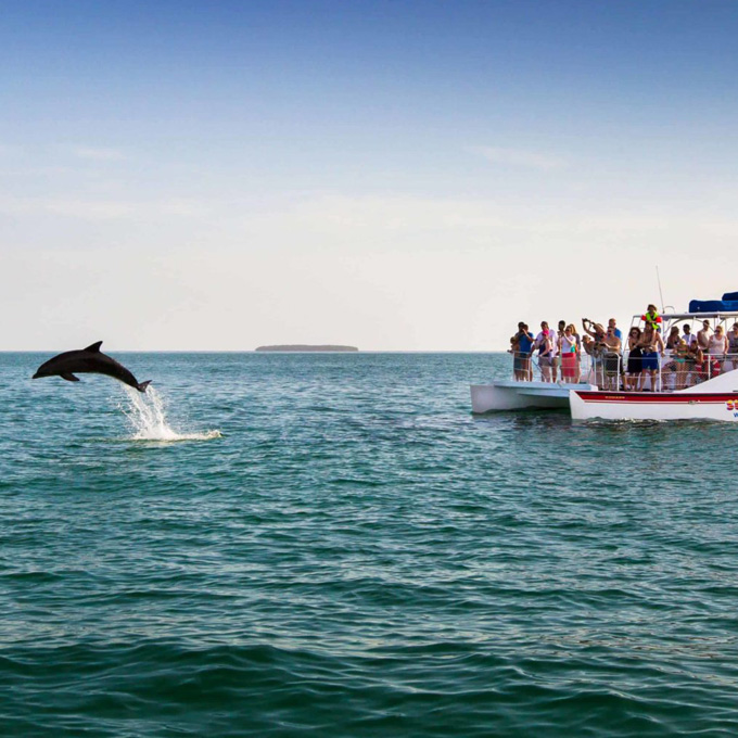 See Dolphins in Key West