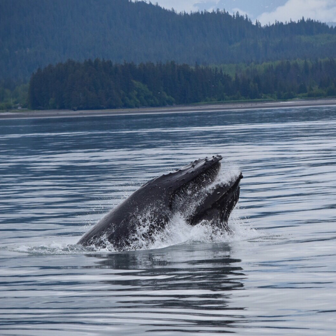 Whale Watching Tour in Alaska