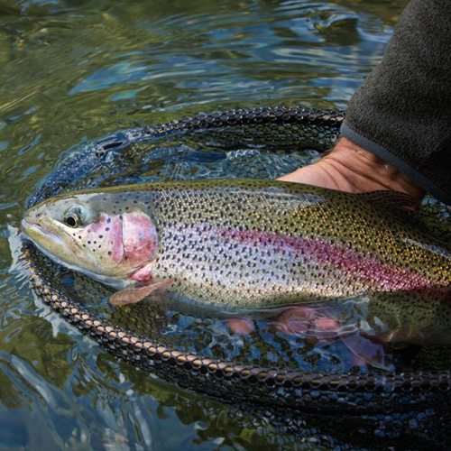 Guided Trout Fly Fishing Trip