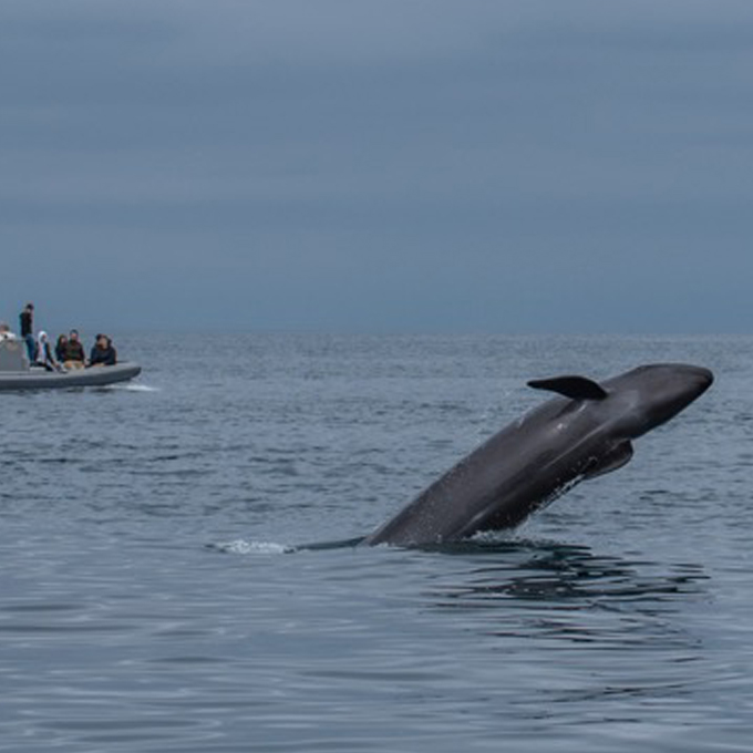 Private Whale Watching in La Jolla, CA