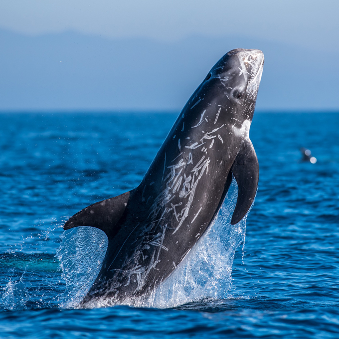 Whale Watching Tour in La Jolla, CA