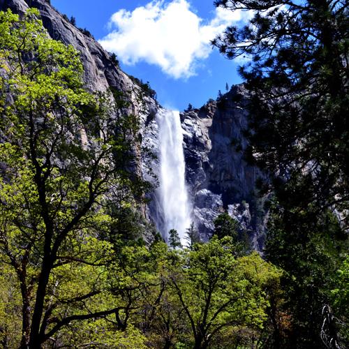 Yosemite Falls on Tour in San Francisco
